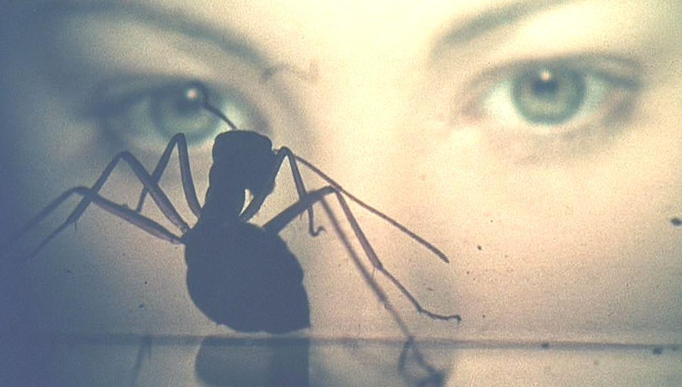 捕獲したアリを見つめる人の顔と蟻のシルエット