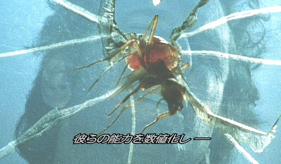 割れた穴から侵入を試みて人間に襲いかかる蟻!