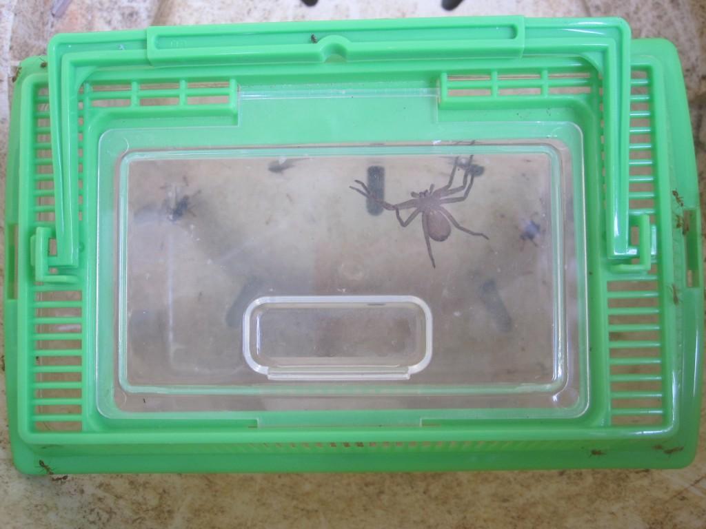 虫かごを屋外に30分ほど放置したらアリの大群がやって来ていた