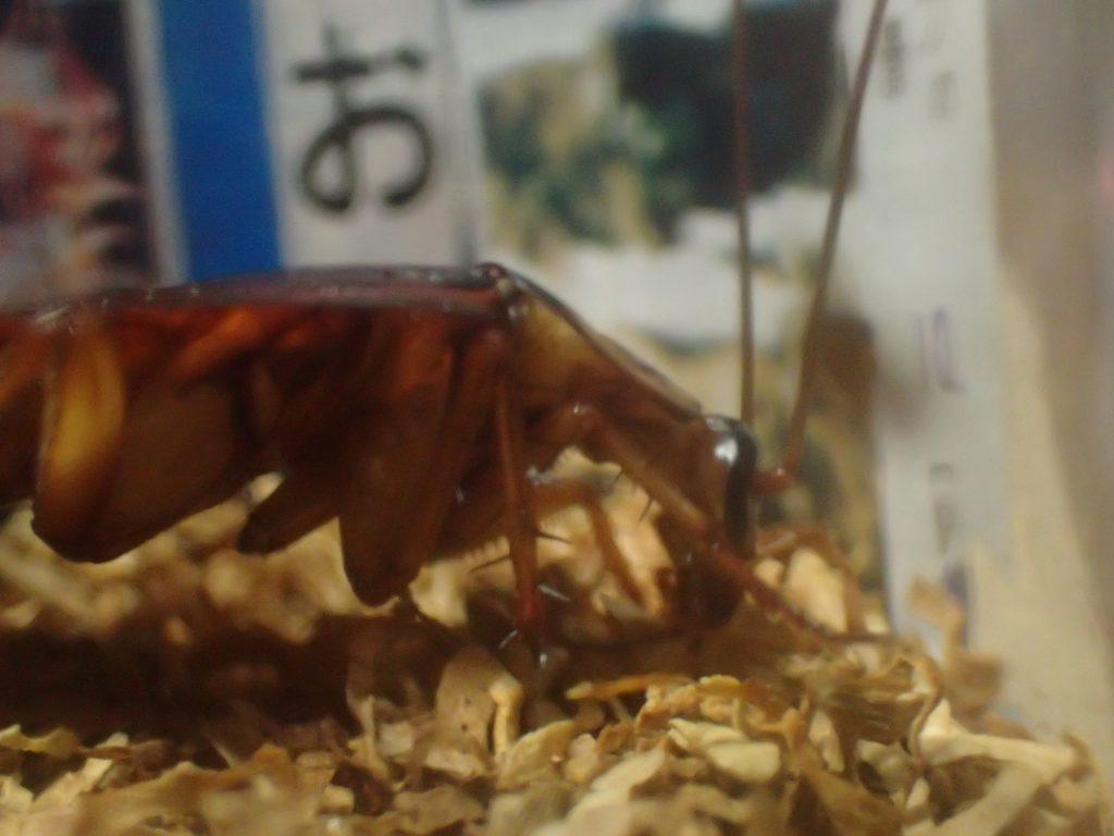 ゴキブリはタバコの葉を食べないという固定概念を打ち破る衝撃のシーンだった