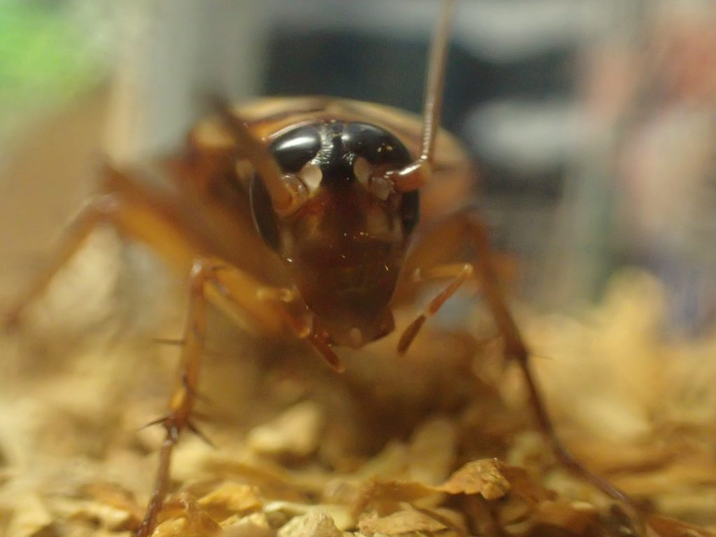 """実験で出た結論は""""ゴキブリはタバコの葉を食べる"""""""