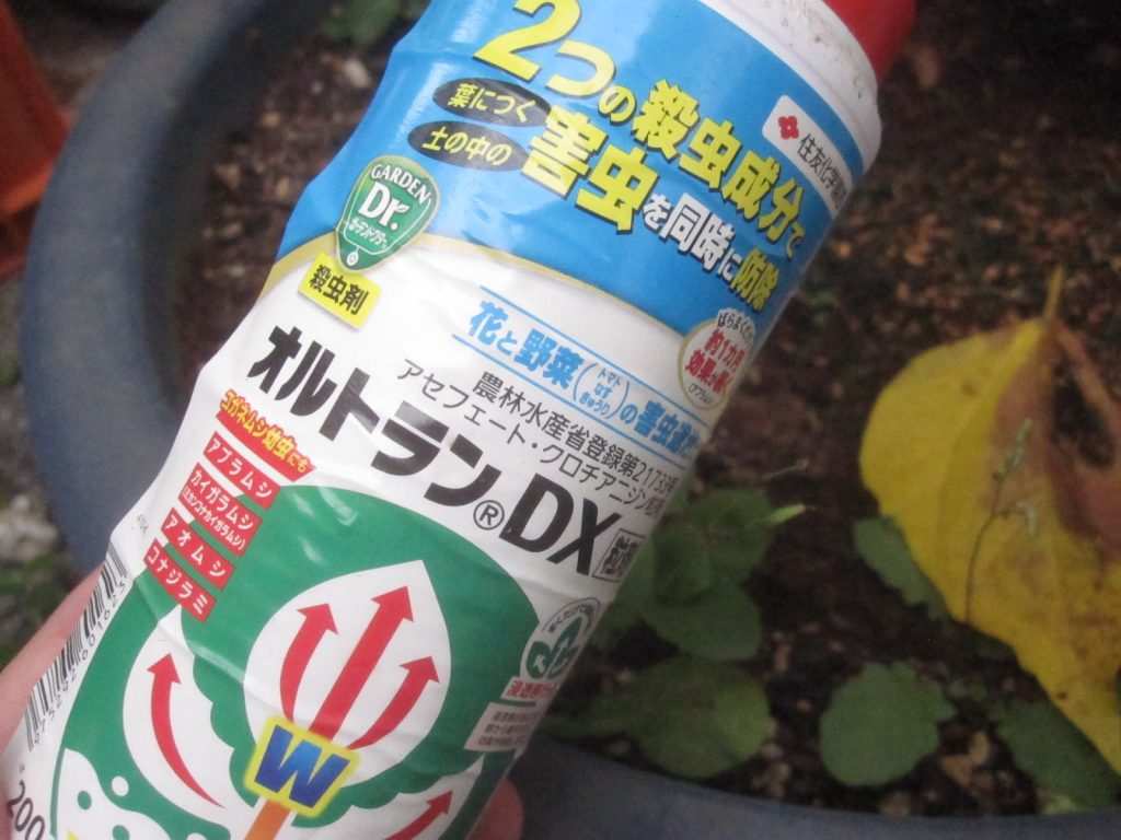カイガラムシ退治の殺虫剤オルトランDX粒剤の登場!