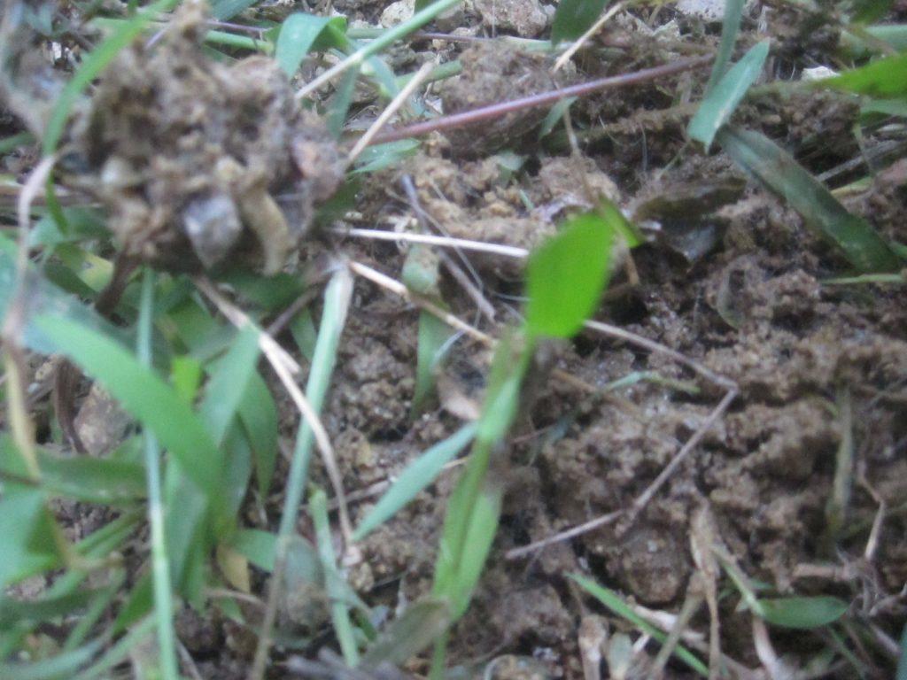 ウンチの中に白く大きなウジ虫がクネクネと移動している!