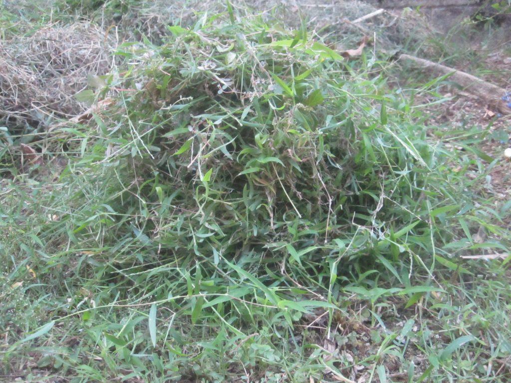 刈った雑草を高く積み上げて野良猫ウンチを封印する!