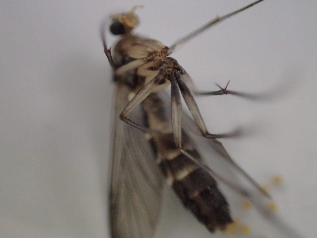 背中を下にしてひっくり返った謎の昆虫