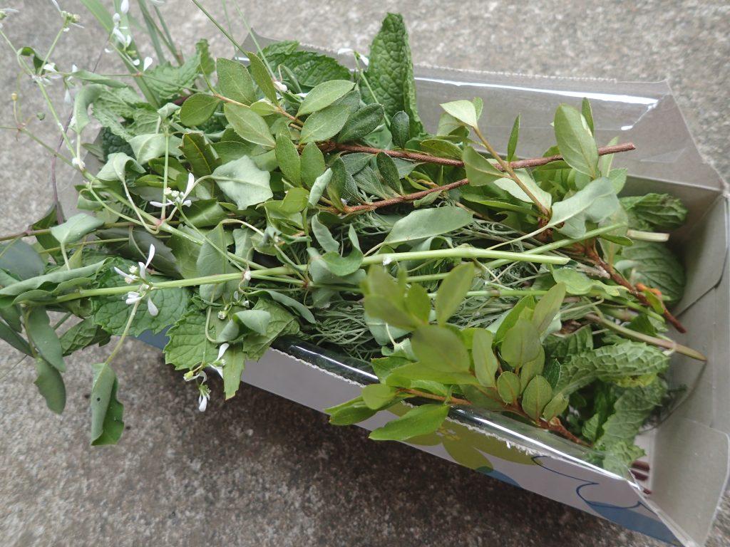約6種類の香草ハーブを摘んだ様子