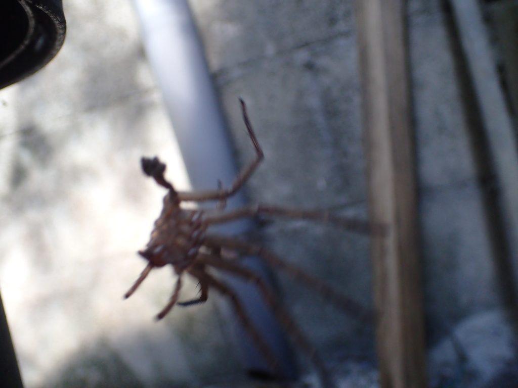 植木鉢の裏を覗き込んでみると、蜘蛛のような形をした物体がユラユラ揺れていた