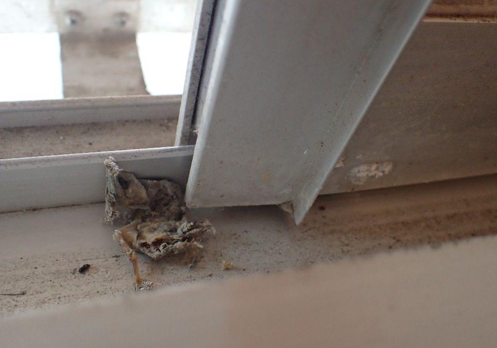窓に挟まって圧死したヤモリの死骸が開け閉めの邪魔になっていた