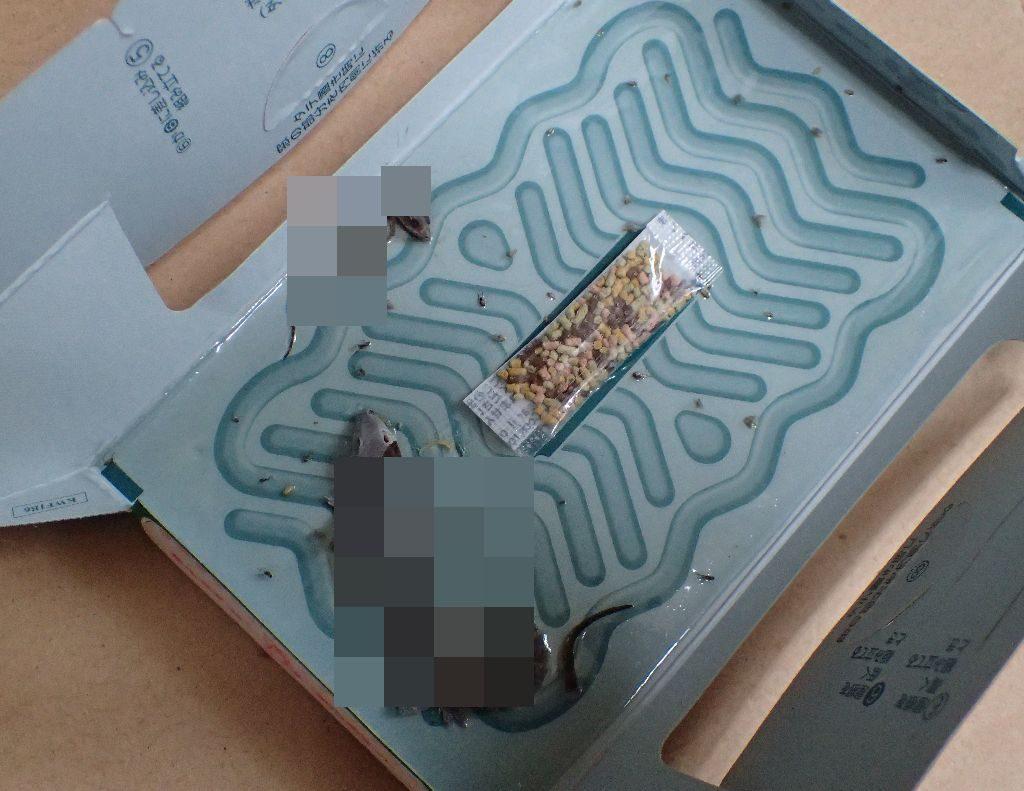 ごきぶりホイホイの粘着シートの罠に掛かってしまったヤモリの写真
