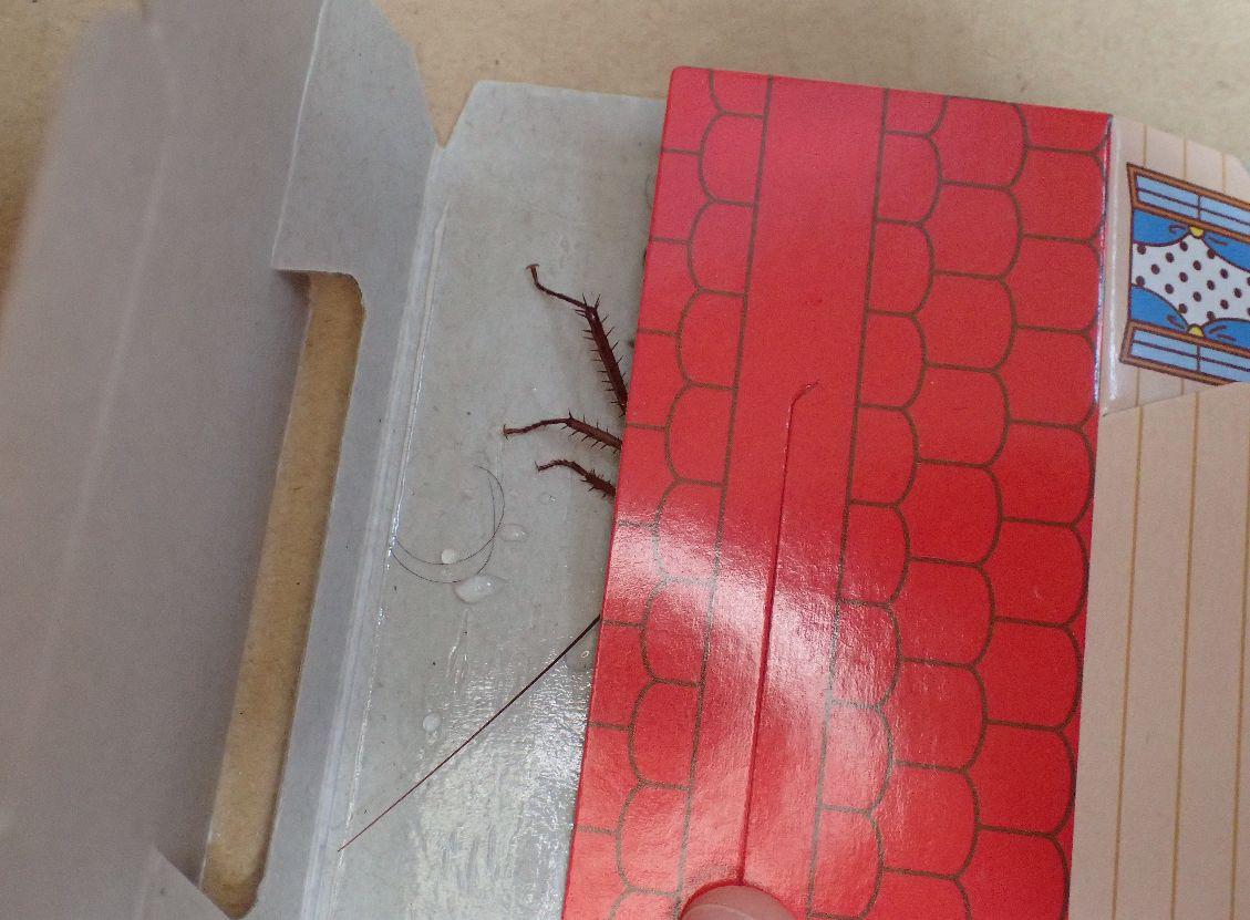 ゴキブリゴールインを折りたたんでゴキブリの動きを封じる様子