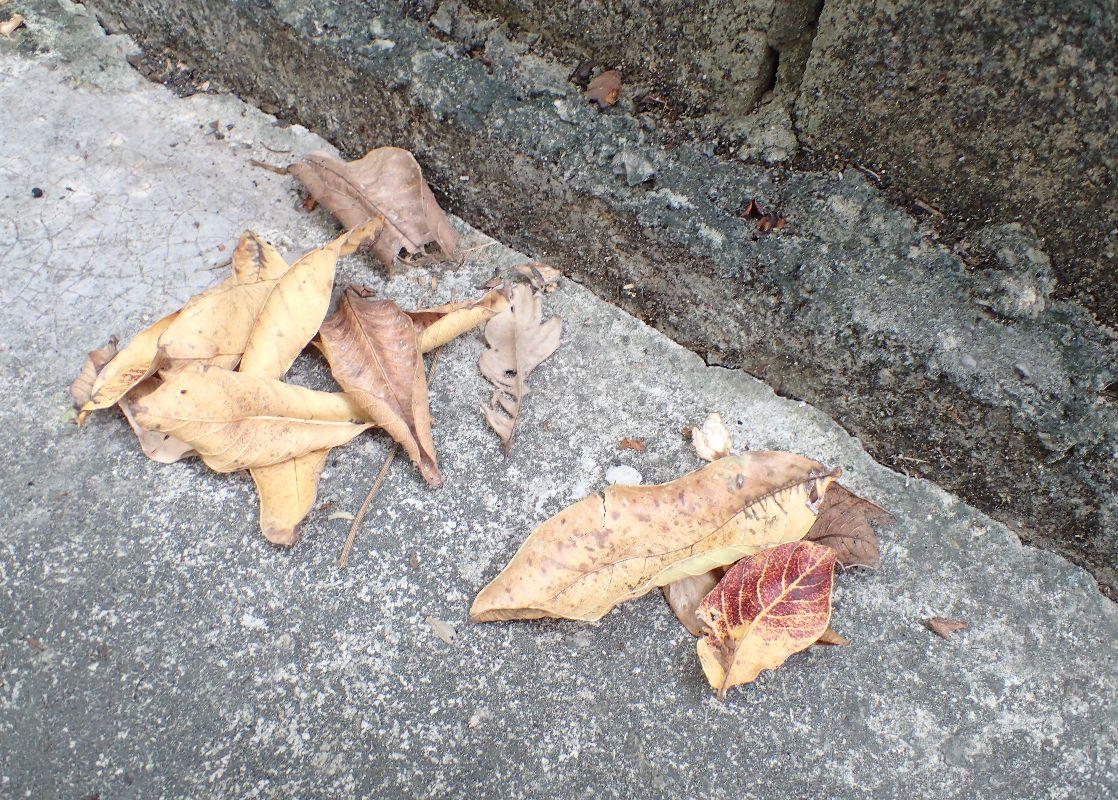 落ち葉が枯れて風に吹かれ一箇所に集まっている