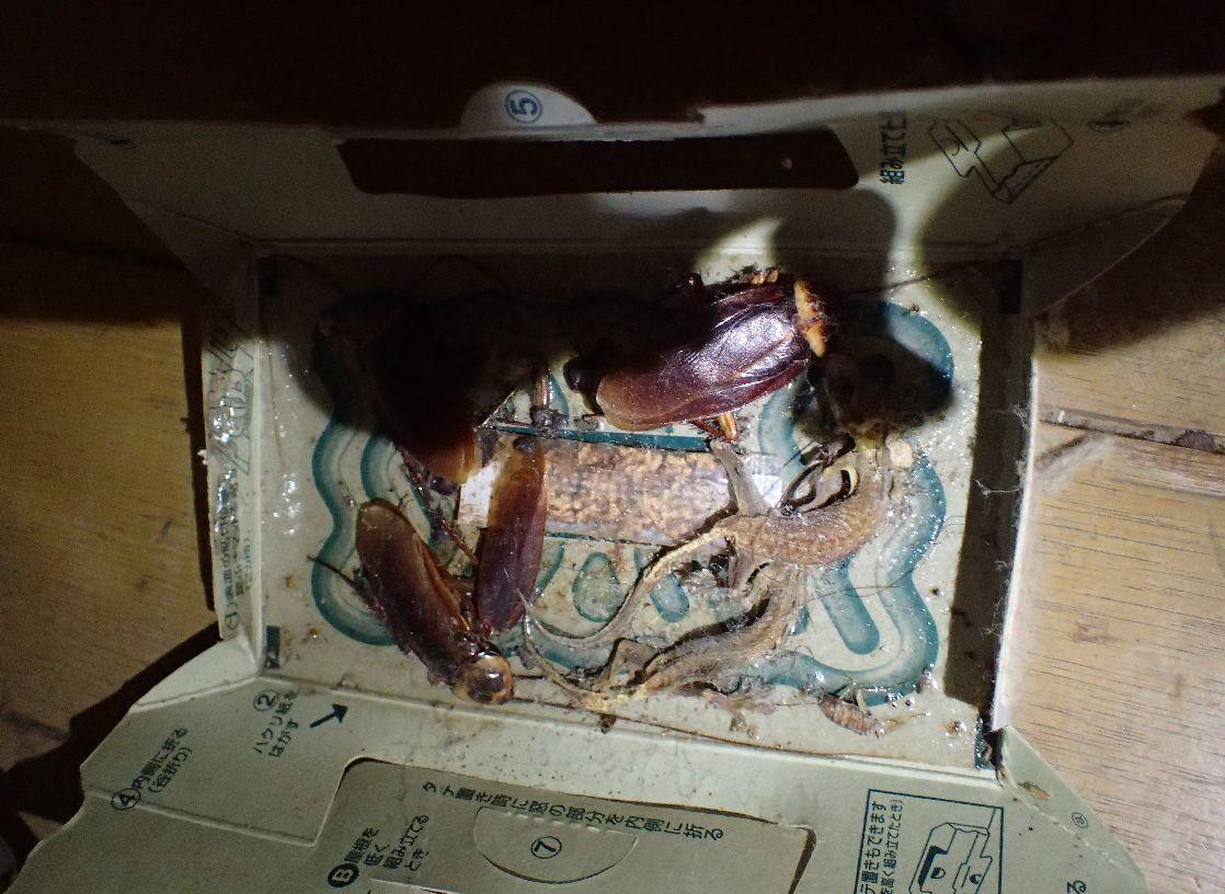 """3年間放置されたゴキブリ駆除用品""""ごきぶりホイホイ""""の中身"""