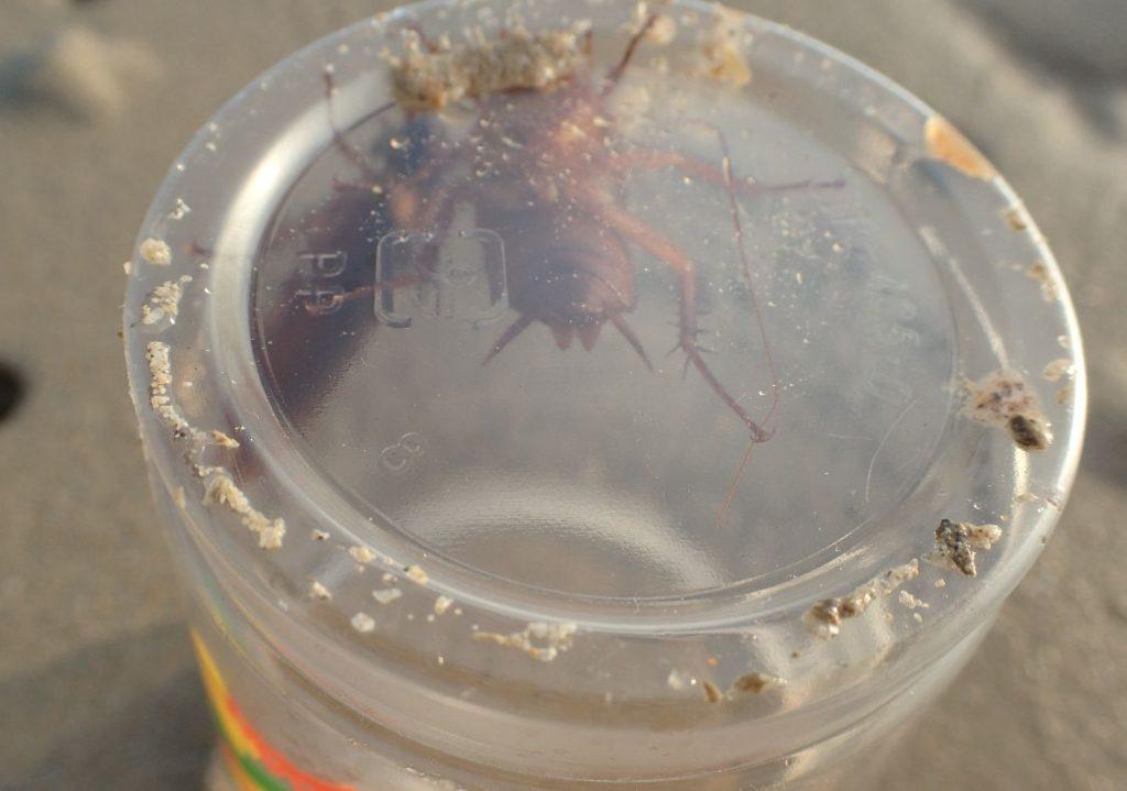 カップの中身は2匹のゴキブリ