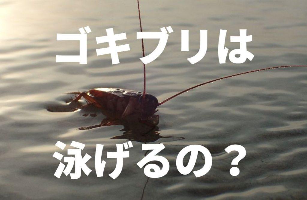 ゴキブリは泳げるのか?