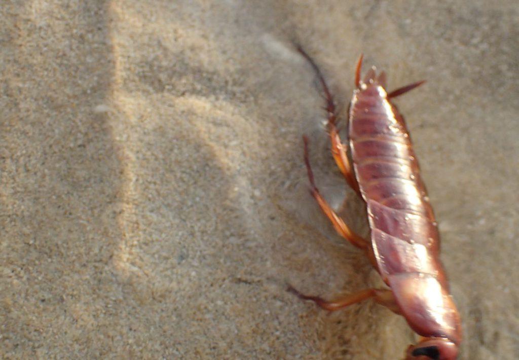 猛ダッシュでカメラに走り寄るゴキブリ