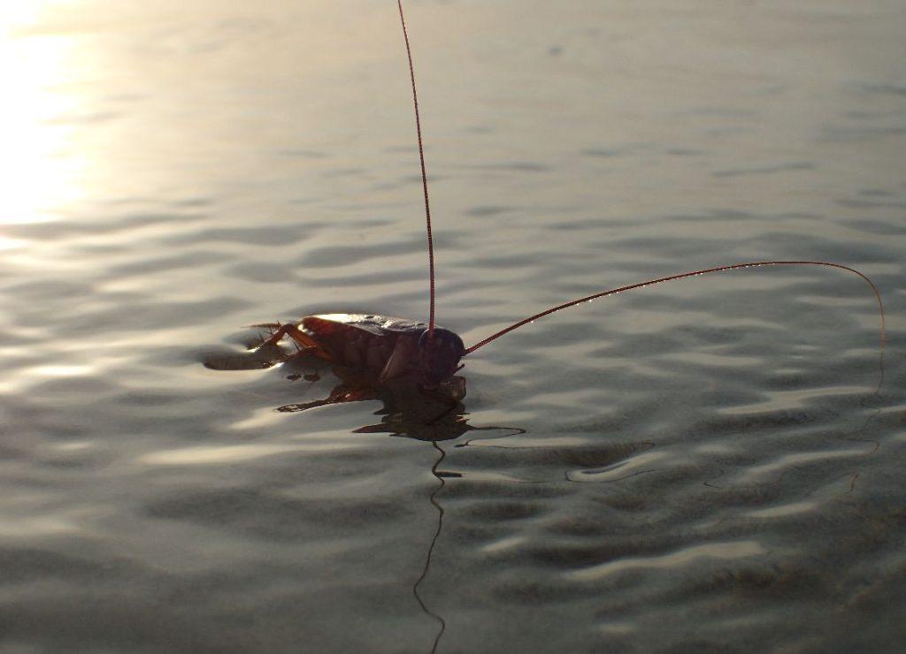 潮水に浸かっていくゴキブリ