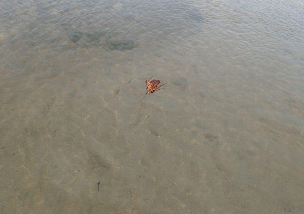 波にさらわれていくゴキブリ