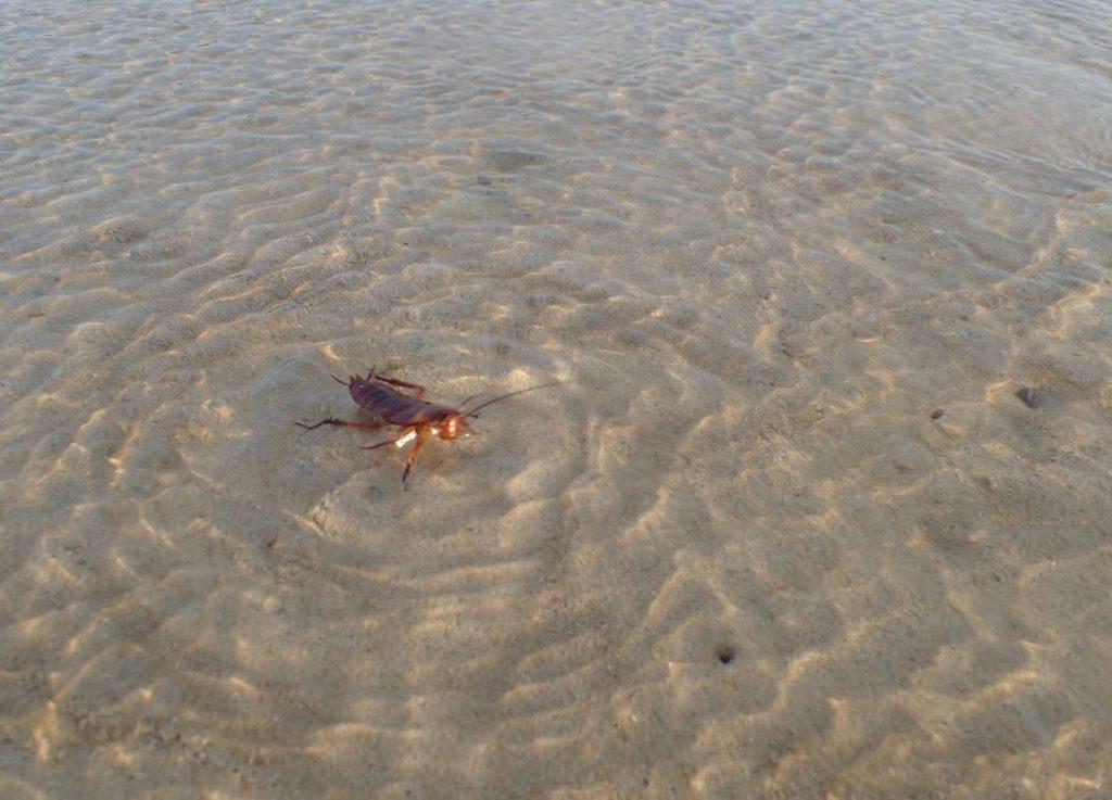 海に浮かんで足をジタバタ指せるゴキブリ