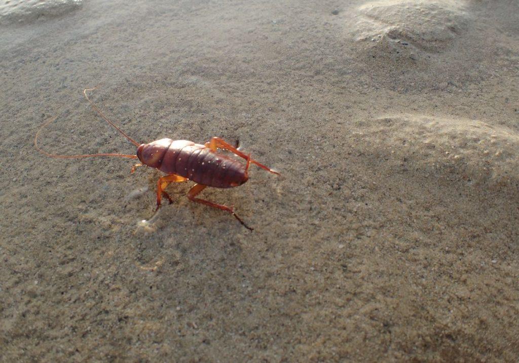 海に入ったゴキブリ