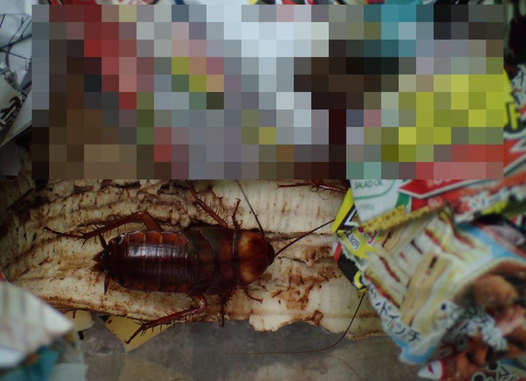 虫カゴ生ゴミトラップにかかったゴキブリ
