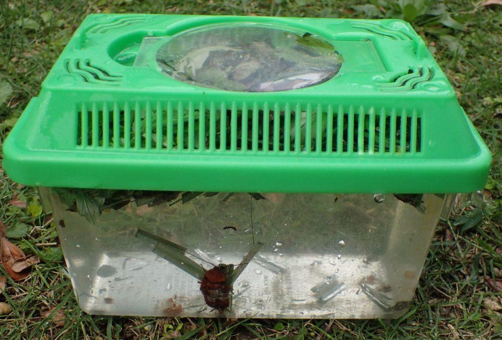 駆除と掃除をかねて熱湯を注いだ虫カゴ