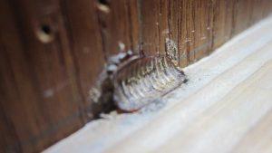 屋内の部屋の片隅にゴキブリの卵の殻を発見