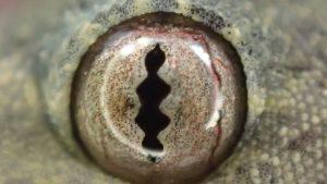 ヤモリの顔の表情を捉える超接写撮影写真